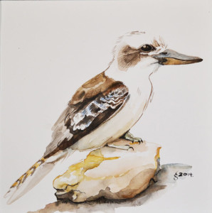Kookaburra1-(small)